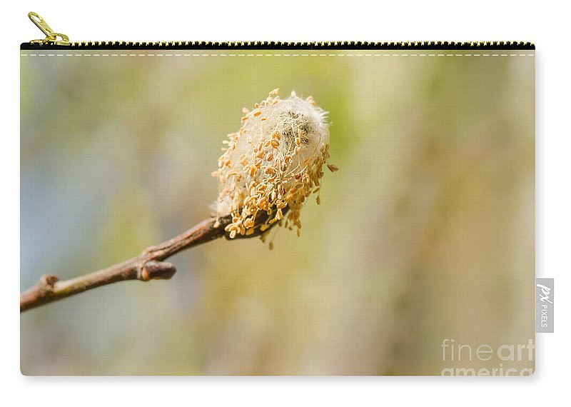 Weeping Willow Carry-all Pouch featuring the photograph Weeping Willow Seed by Nikki Vig