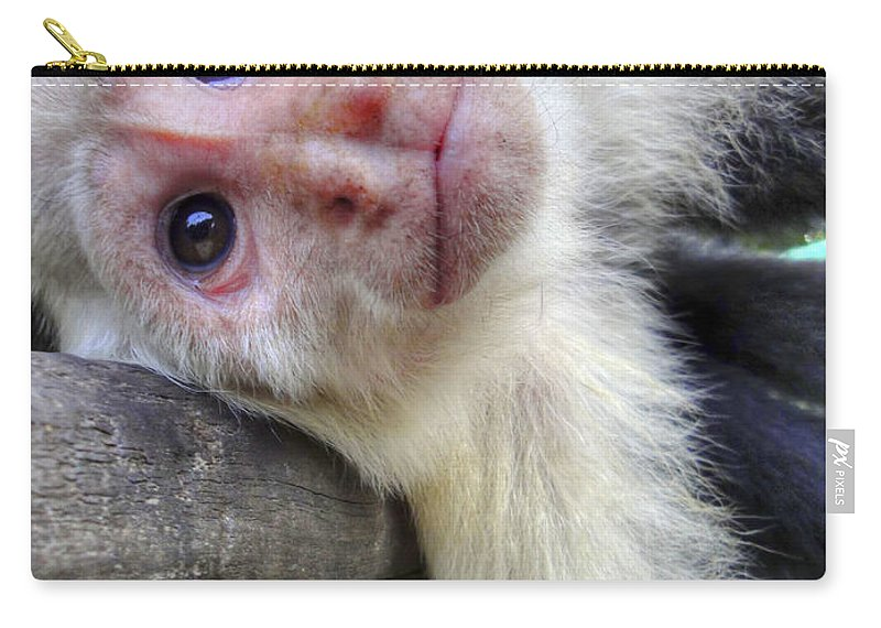 Capuchin Monkey Carry-all Pouch featuring the photograph Welcome To Paradise Gardens by Dolly Sanchez