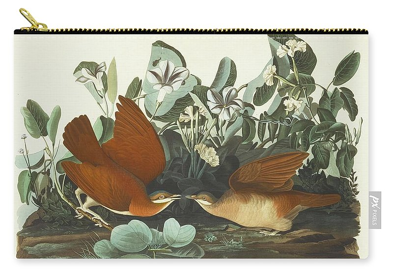 John James Audubon (after) Key-west Dove (plate Clxvii) Carry-all Pouch featuring the painting West Dove by MotionAge Designs