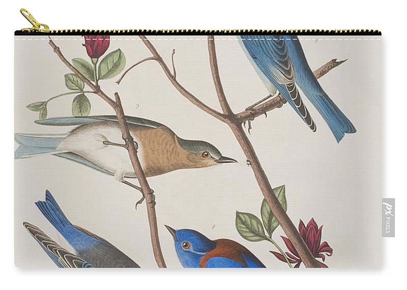 Western Blue-bird Carry-all Pouch for Sale by John James Audubon