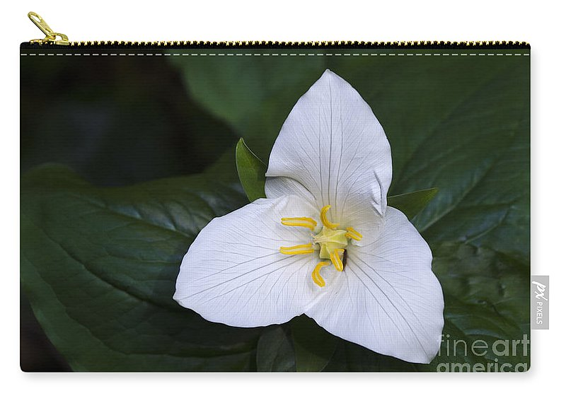 Trillium Ovatum Carry-all Pouch featuring the photograph Wildflowers Western Trillium Oregon 1 by Bob Christopher