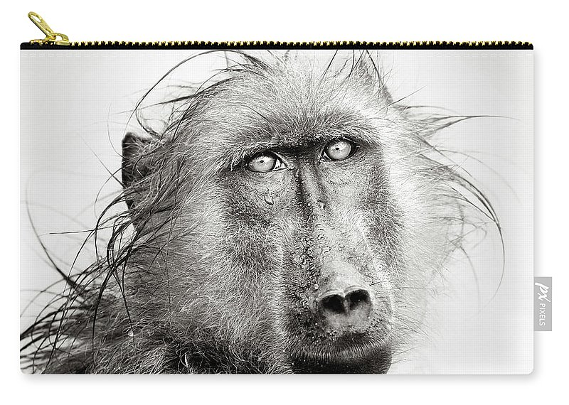 Baboon Carry-all Pouch featuring the photograph Wet Baboon Portrait by Johan Swanepoel