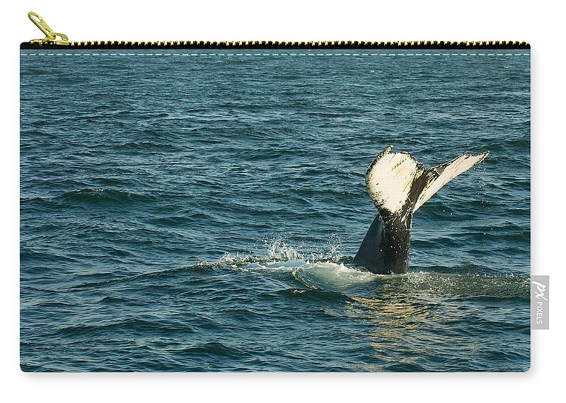Whale Carry-all Pouch featuring the photograph Whale by Sebastian Musial