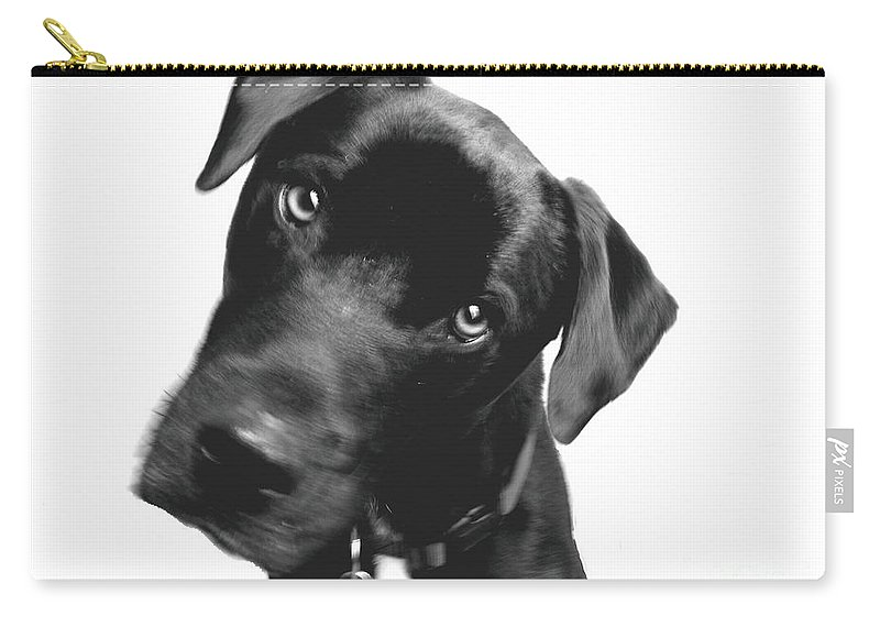 Labrador Carry-all Pouch featuring the photograph What by Amanda Barcon