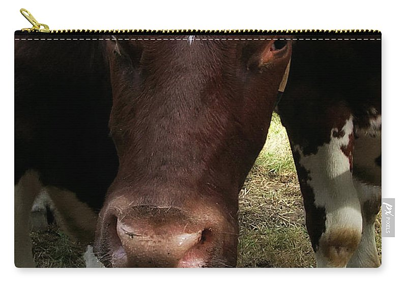 Ox Carry-all Pouch featuring the photograph What Are You Staring At by RC DeWinter