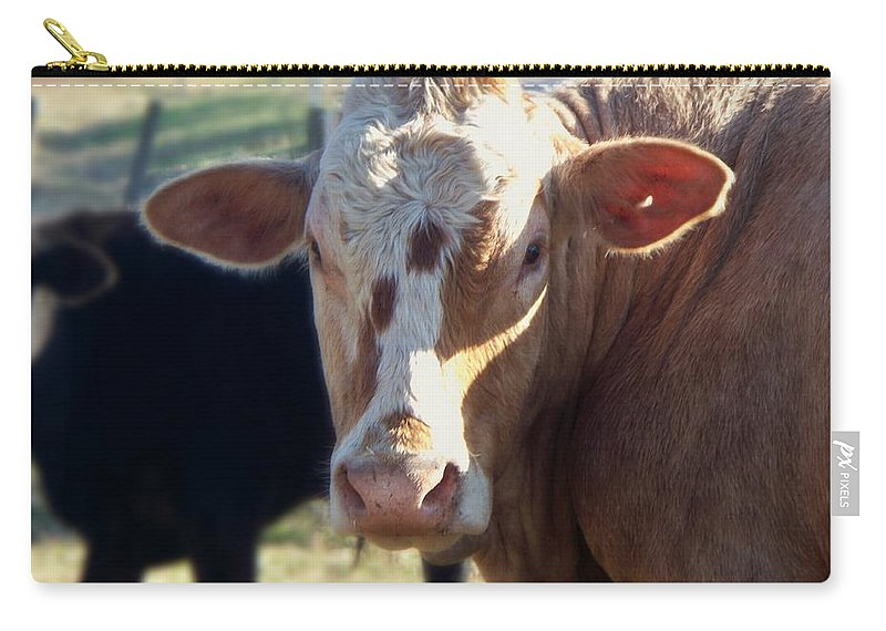 Animals Carry-all Pouch featuring the photograph What You Lookin' At by Betty Northcutt