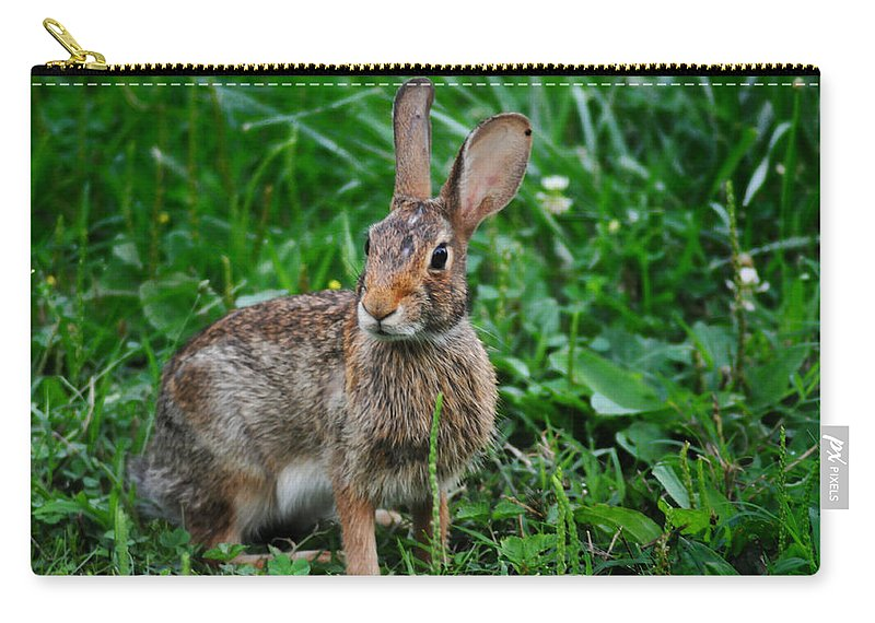 Rabbit Carry-all Pouch featuring the photograph Whats Up Doc by Bill Cannon