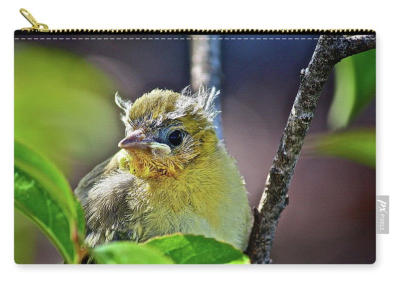 Bird Carry-all Pouch featuring the photograph Where Am I by Diana Hatcher