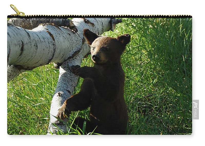 Bear Carry-all Pouch featuring the photograph Where's Mom by Donna Blackhall