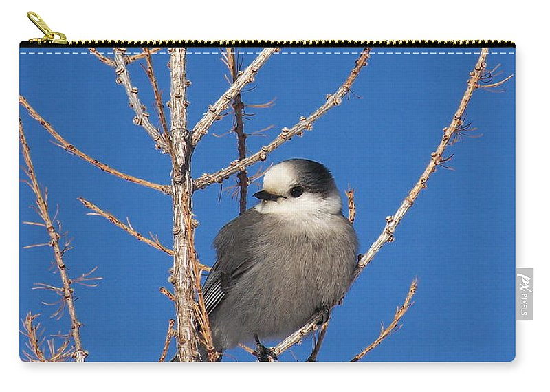 Whiskey Jack Carry-all Pouch featuring the photograph Whiskey Jack Perched On A Winter Larch by Greg Hammond