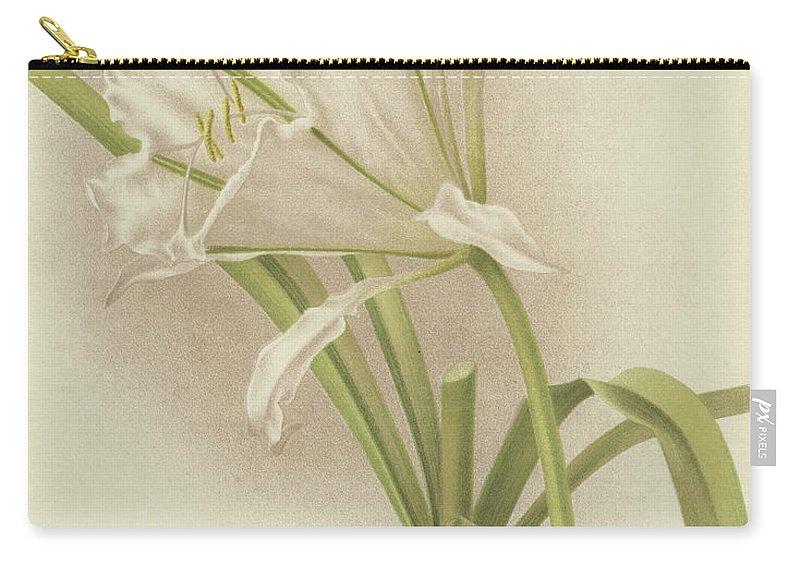 Amaryllis Carry-all Pouch featuring the painting White Amaryllis  Ismene Andreana by English School