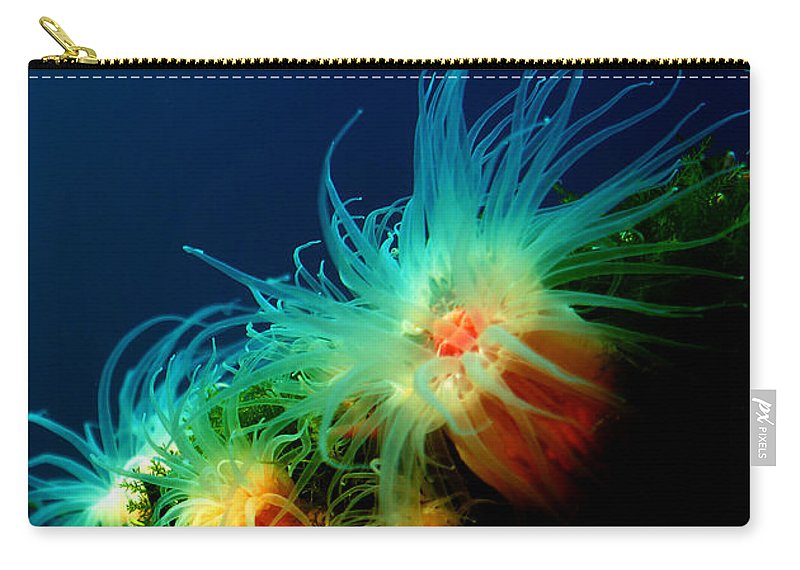 Anemone Carry-all Pouch featuring the photograph White Anemone by Mumbles and Grumbles