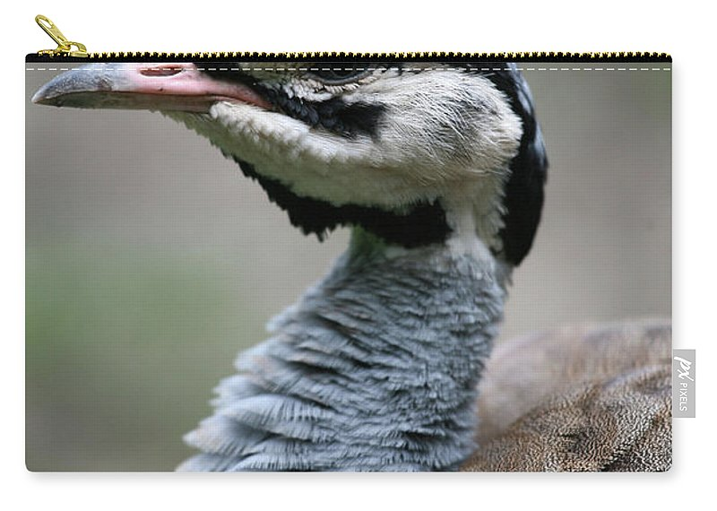White Bellied Bustard Carry-all Pouch featuring the photograph White Bellied Bustard by Karol Livote
