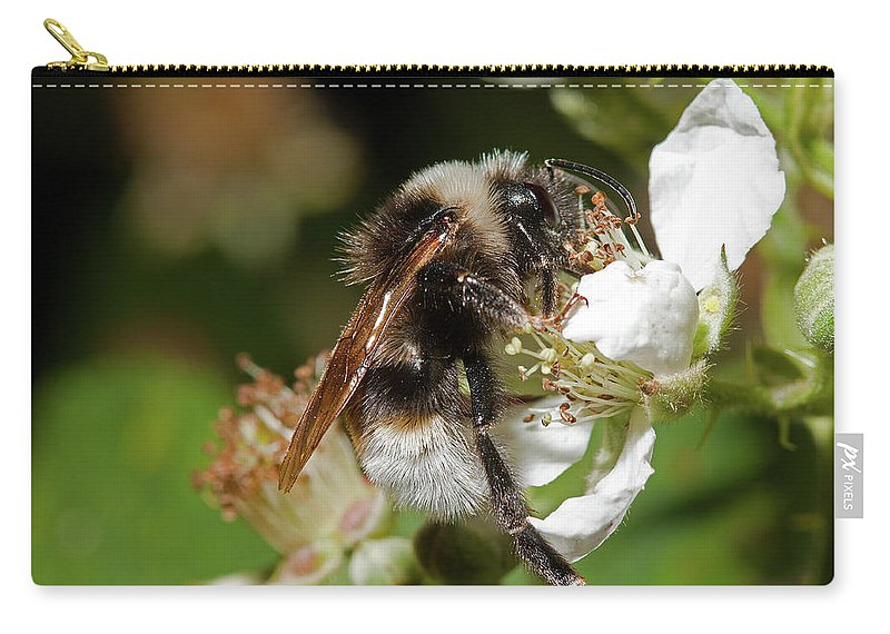 Hymenoptera Carry-all Pouch featuring the photograph White Bumblebee by Bob Kemp