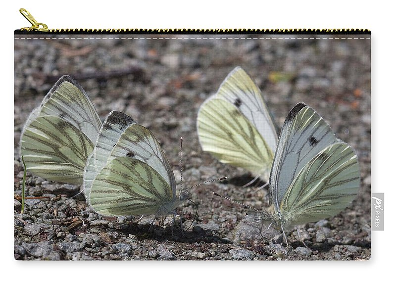 Butterfly Carry-all Pouch featuring the photograph White Butterflies by Bob Kemp