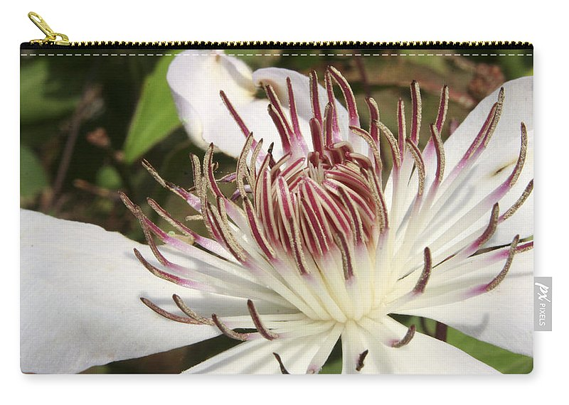 Clematis Carry-all Pouch featuring the photograph White Clematis Henryi by Margie Wildblood