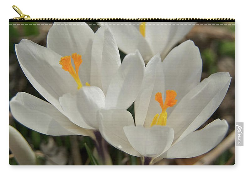 Crocus Carry-all Pouch featuring the photograph White Crocuses by Michael Peychich