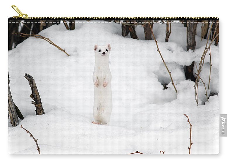 White Weasel Carry-all Pouch featuring the photograph White Ermine by Leland D Howard