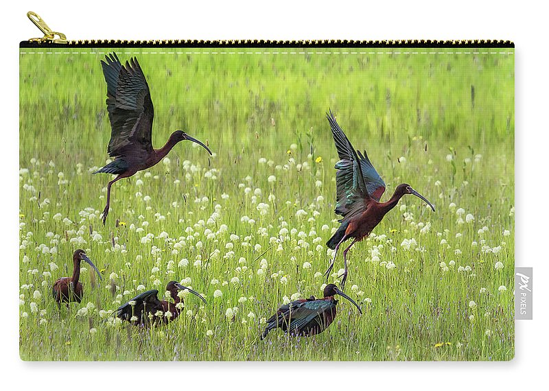 White-faced Ibis Carry-all Pouch featuring the photograph White-faced Ibis Rising, No. 1 by Belinda Greb