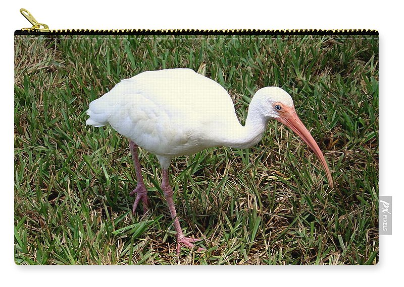 White Carry-all Pouch featuring the photograph American White Ibis Bird by Anita Hiltz
