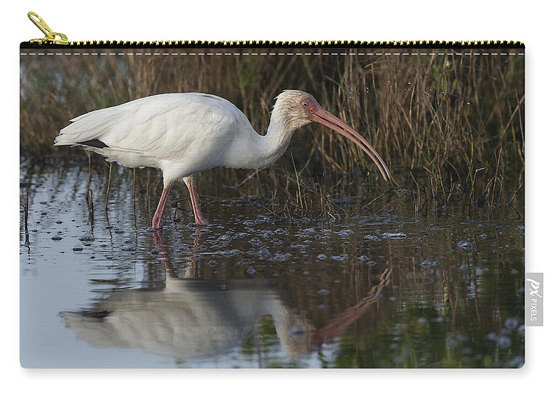 American Carry-all Pouch featuring the photograph White Ibis Feeding by David Watkins