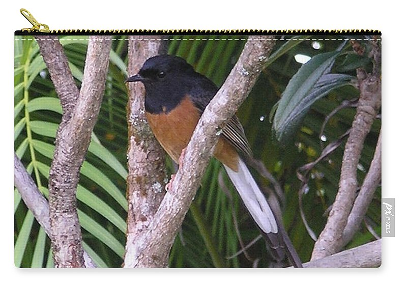 Black Birds Carry-all Pouch featuring the photograph White Rumped Shama by Mary Deal