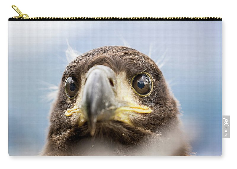 Eagle Carry-all Pouch featuring the photograph White-tailed Eagle #2 by Alfred Lucas