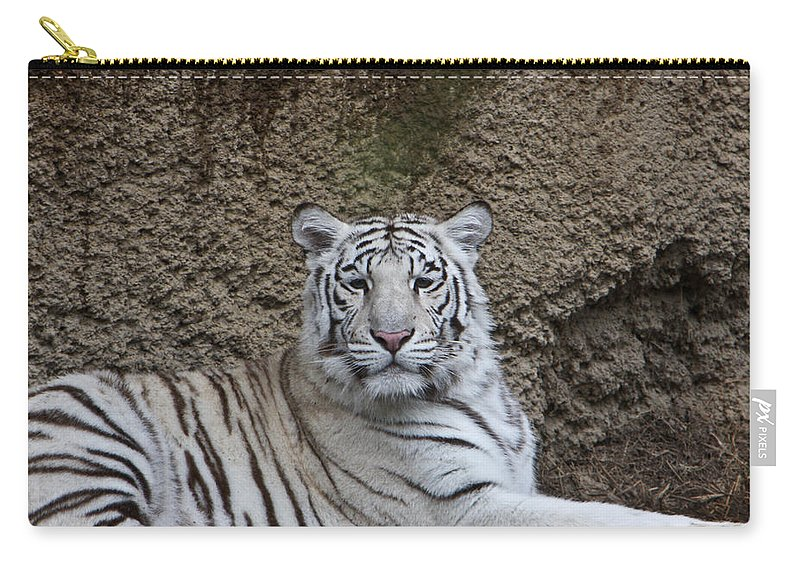 White Carry-all Pouch featuring the photograph White Tiger Resting by Douglas Barnett