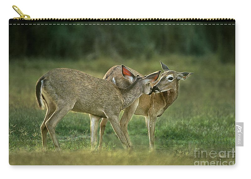 North America Carry-all Pouch featuring the photograph Whitetail Deer Share An Initmate Moment Texas Wildlife by Dave Welling