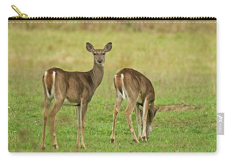 Deer Carry-all Pouch featuring the photograph Whitetail Does Grazing by Michael Peychich