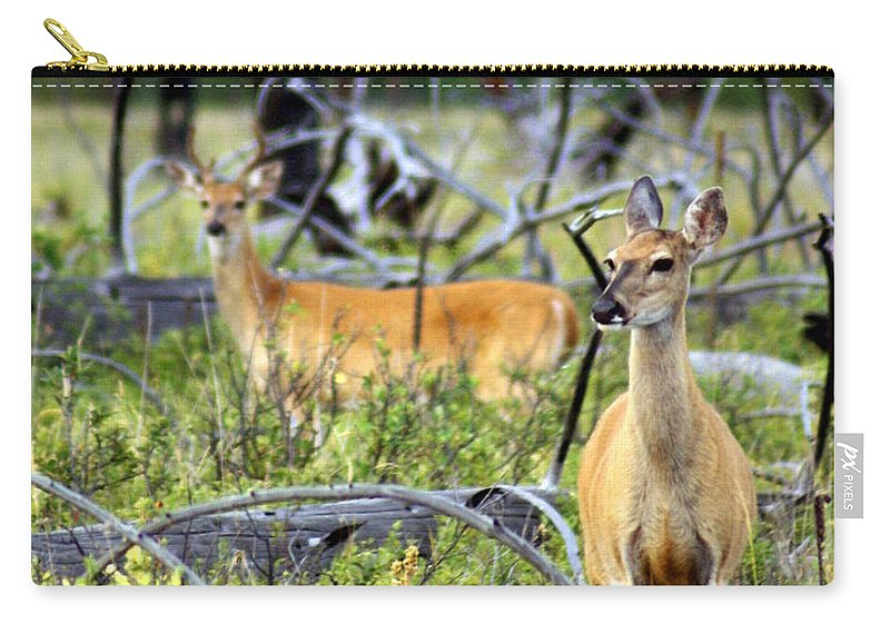 Deer Carry-all Pouch featuring the photograph Whitetails by Marty Koch