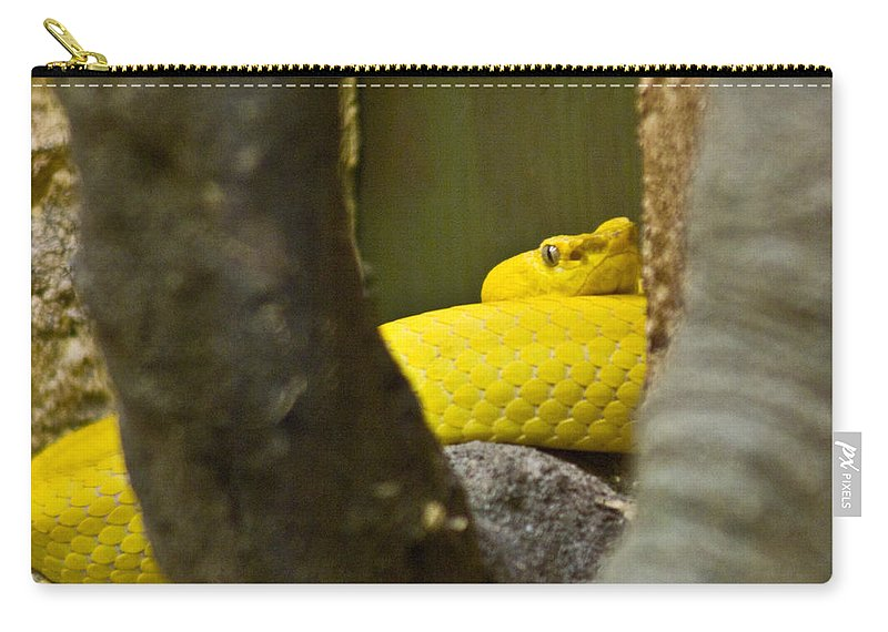 Yellow Carry-all Pouch featuring the photograph Wicked snake by Douglas Barnett