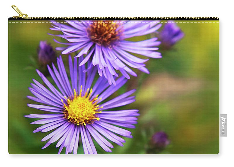 Wildflower Carry-all Pouch featuring the photograph Wild Aster Trio by Christina Rollo