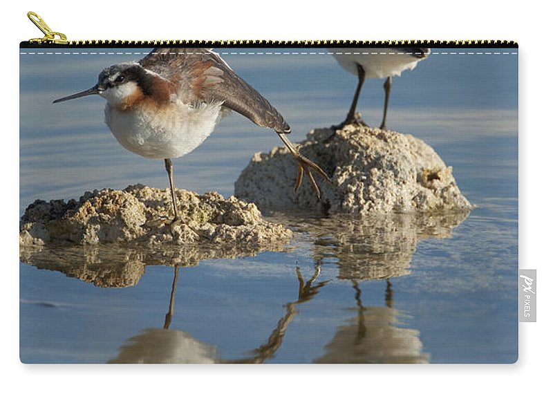 Wilson's Phalarope Carry-all Pouch featuring the photograph Wildons Phalaropes by Marie Read