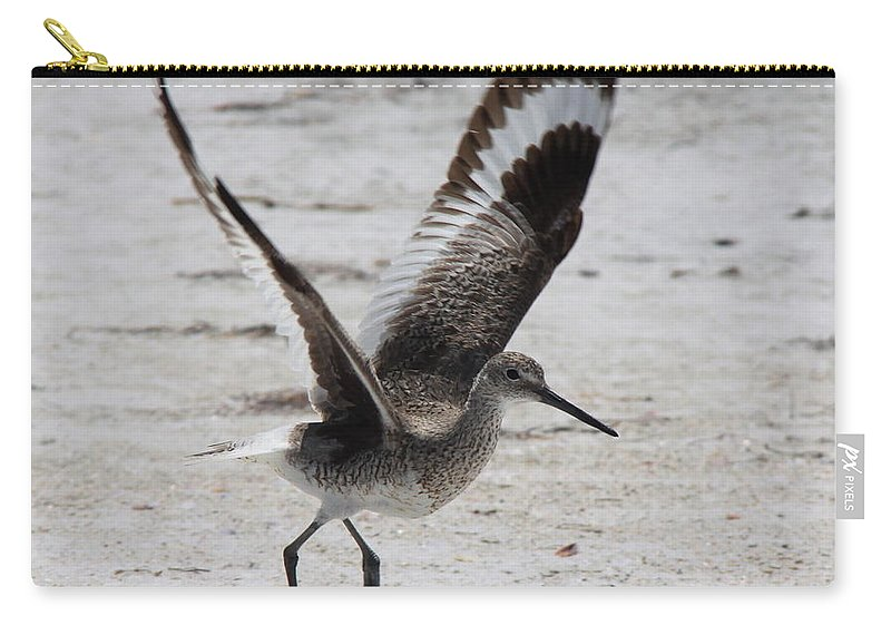 Willet Carry-all Pouch featuring the photograph Willet Take-off by Barbara Bowen