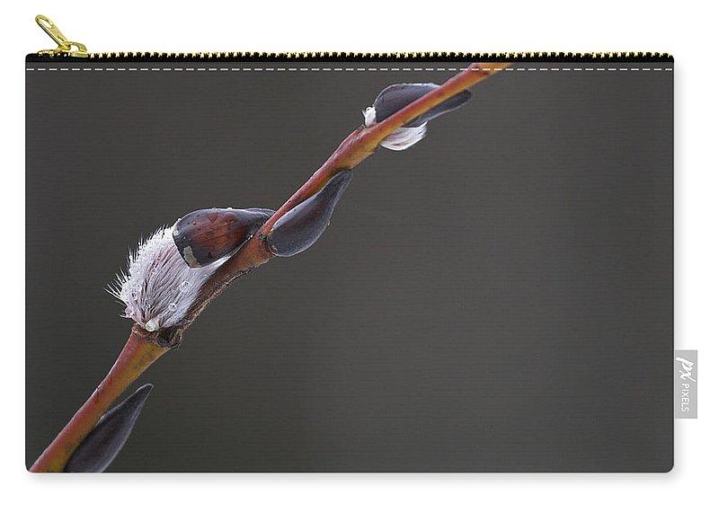 Lehtokukka Carry-all Pouch featuring the photograph Willow Catkins 3 by Jouko Lehto