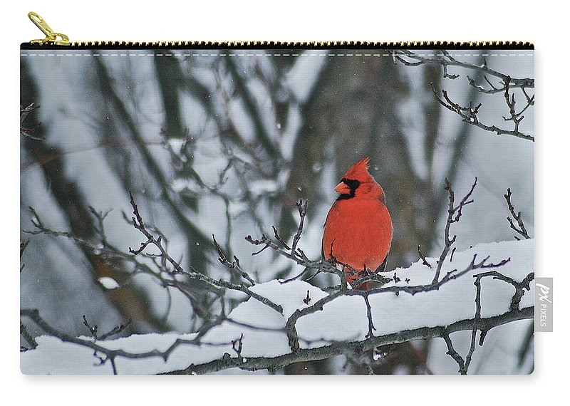 Cardinal Carry-all Pouch featuring the photograph Winter Cardinal by Michael Peychich