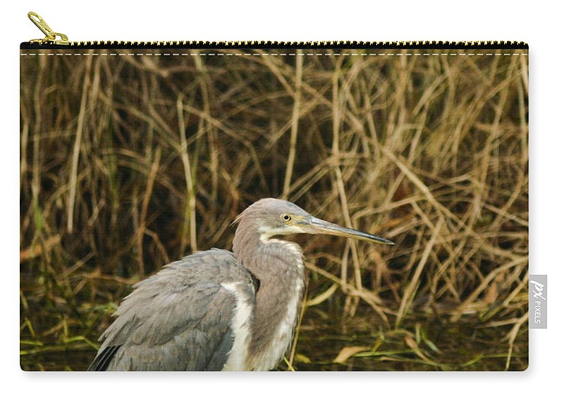 Bird Carry-all Pouch featuring the photograph Winter Coat by Phill Doherty