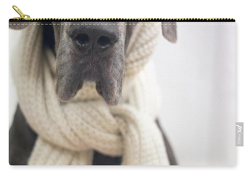 Great Dane Carry-all Pouch featuring the photograph Winter Dog by Angela Edwards-Warburton