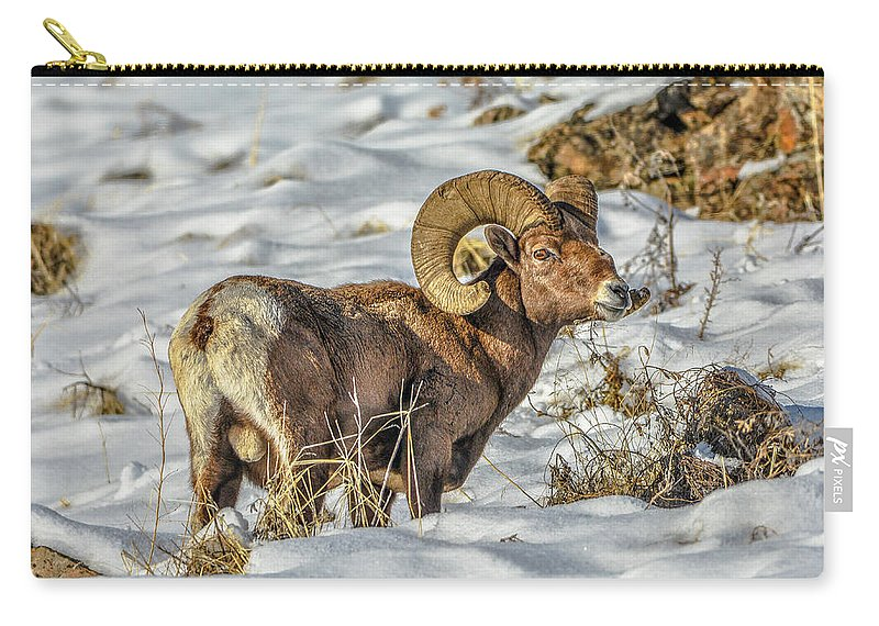 Bighorn Ram Carry-all Pouch featuring the photograph Wintering Bighorn by Jason Brooks