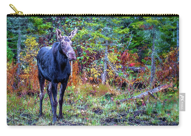 Maine Carry-all Pouch featuring the photograph Wise And Strong by Mary Koenig Godfrey