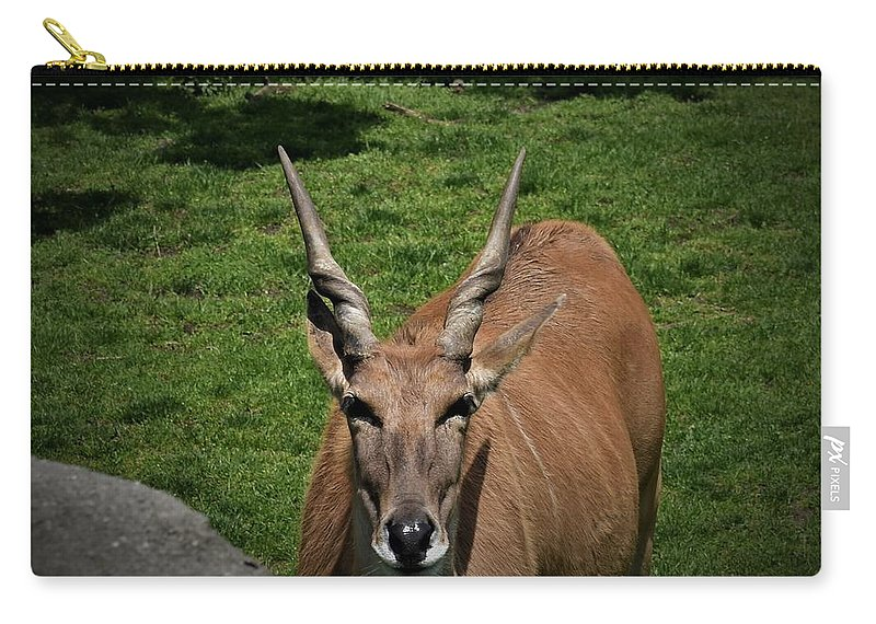 Animal Carry-all Pouch featuring the photograph Wise Guy by Amanda Gustafson