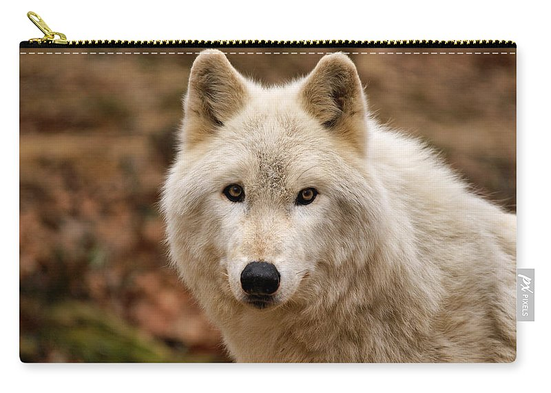Wolf Carry-all Pouch featuring the photograph Wolf Watching by Sandy Keeton
