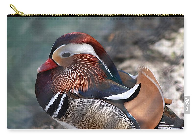 Sylvan Heights Bird Sanctuary 4 2015 Carry-all Pouch featuring the photograph Wood Duck by Teresa Doran