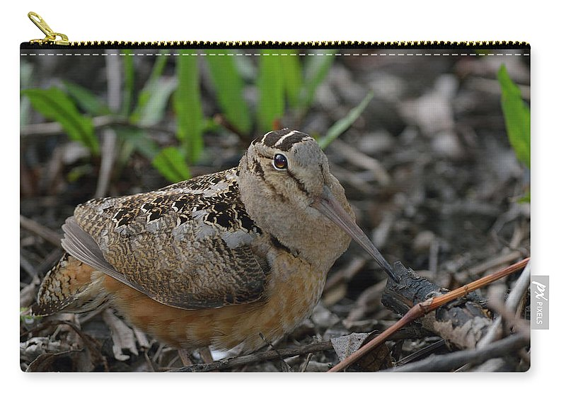 North American Carry-all Pouch featuring the photograph Woodcock In The Woods by Mark Wallner