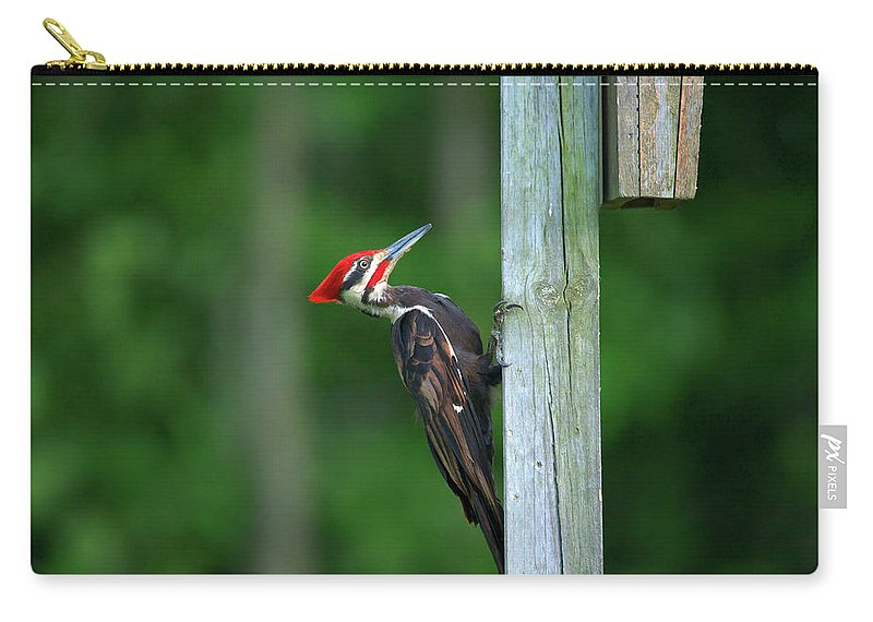 Pileated Woodpecker Carry-all Pouch featuring the photograph Woody Woodpecker by Linda Kerkau
