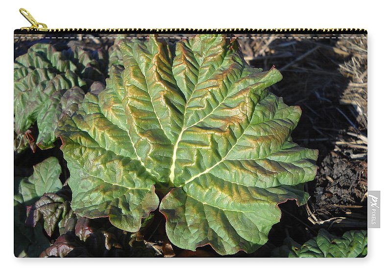 Rhubarb Carry-all Pouch featuring the photograph Wrinkled Green Rhubarb Leaf by Kent Lorentzen