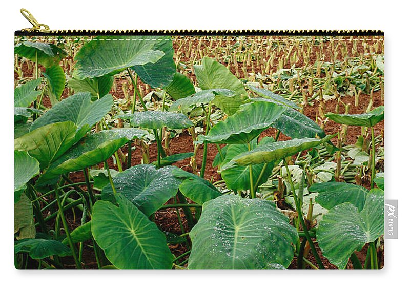 Agriculture Carry-all Pouch featuring the photograph Yams Farm In Azores by Gaspar Avila