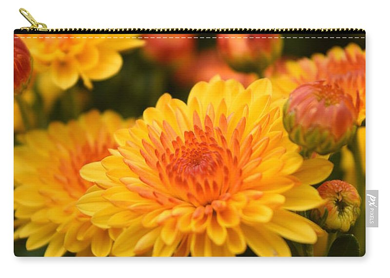 Chrysanthemum Carry-all Pouch featuring the photograph Yellow And Red Autumn Mums Closeup I by Rowena Throckmorton