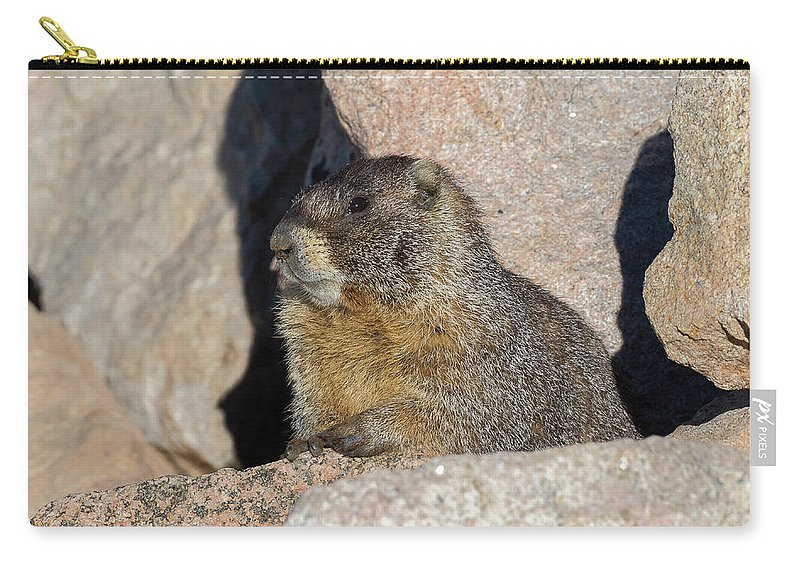 Marmot Carry-all Pouch featuring the photograph Yellow-bellied Marmot Poses For Pictures by Tony Hake